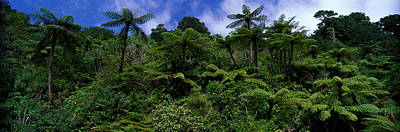 Rain Forest Paparoa National Park S Poster by Panoramic Images