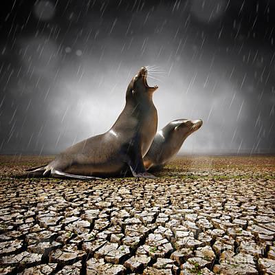 Rain Relief Poster by Carlos Caetano