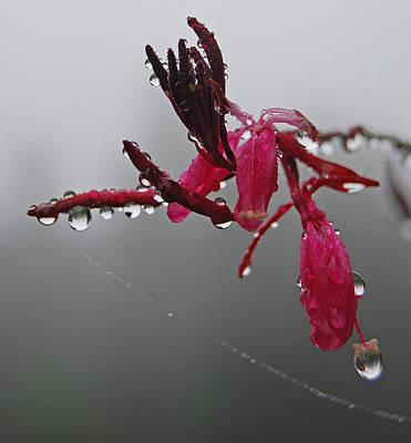 Rain Weaver Poster by Jani Freimann
