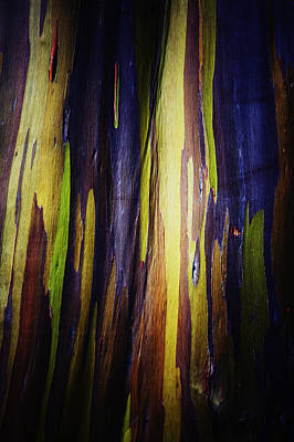 Rainbow Eucalyptus Tree Bark Poster by Charmian Vistaunet