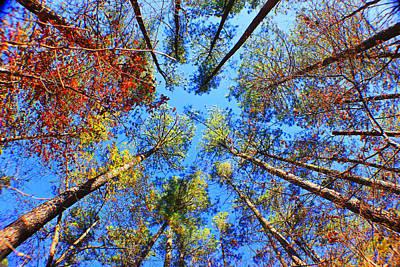 Rainbow Fall Poster
