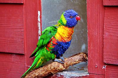 Rainbow Lory Poster by Cynthia Guinn
