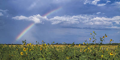 Rainbow Over Sunflowers Poster