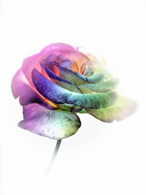 Rainbow Rose Poster by Marianna Mills