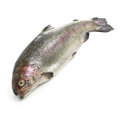 Rainbow Trout Poster