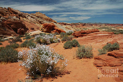 601p Rainbow Vista In The Valley Of Fire Poster by NightVisions