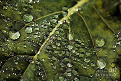 Raindrops Poster by Dennis Bucklin