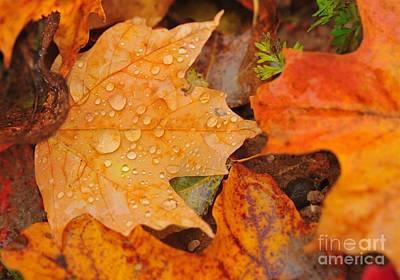 Raindrops On Fallen Maple Leaf Poster
