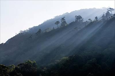 Rainforest At Dawn Poster by K Jayaram