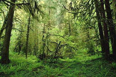 Rainforest Hoh River Valley Washington Poster