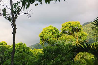 Rainforest, Pico Bonito Lodge, Honduras Poster