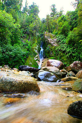 Poster featuring the photograph Rainforest Stream New Zealand by Amanda Stadther