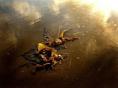 Rainkelp Poster