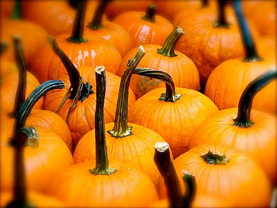 Poster featuring the photograph Rainy Day Pumpkins by Ira Shander