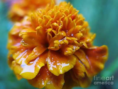 Rainy Marigolds Poster