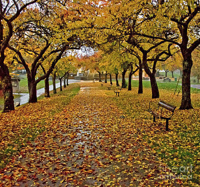 Poster featuring the photograph Rainy Path by Maria Janicki