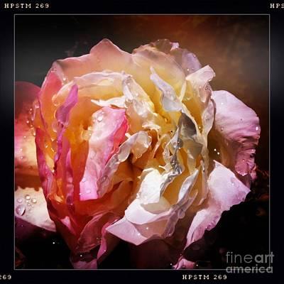 Rainy Rose Poster