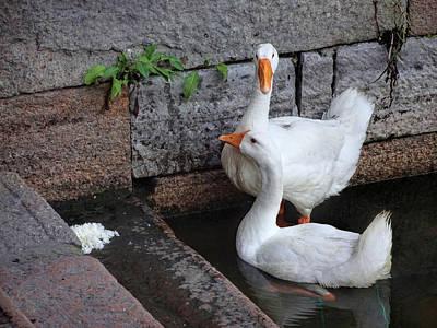 Raising Geese Poster
