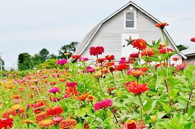 Raising Zinnia Flowers - Delaware Poster