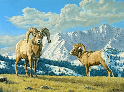 Rams On The Ridge  Poster by Paul Krapf