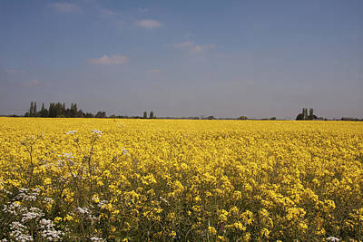 Poster featuring the photograph Rapeseed Field. by Paul Scoullar