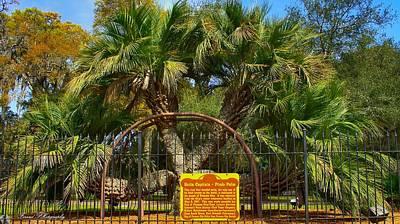 Rare Palm Tree Poster