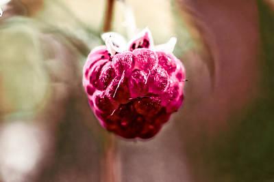 Raspberry Poster by Leif Sohlman