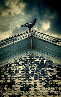 Raven On Roof Poster by Jill Battaglia