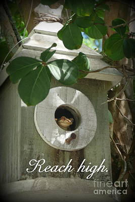 Reach High Poster by Valerie Reeves