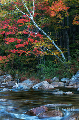 Autumn Foliage Along The Swift River Poster by Thomas Schoeller