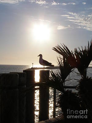 Ready For Sunset Poster by Bev Conover