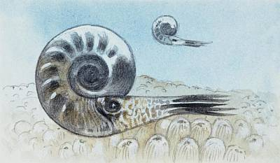 Reconstruction Of Ammonite Poster