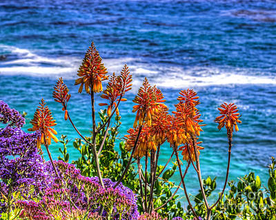 Red Aloe By The Pacific Poster by Jim Carrell