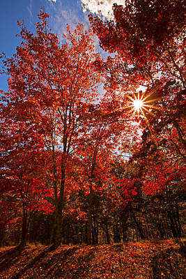Poster featuring the photograph Red Autumn Leaves by Jerry Cowart