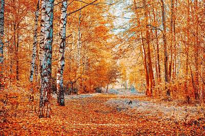 Red Autumnal Birch Grove Poster by Jenny Rainbow