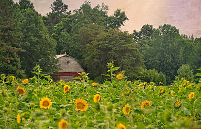 Red Barn Among The Sunflowers Poster