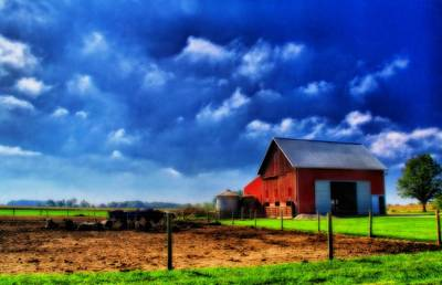 Red Barn And Cows In Ohio Poster by Dan Sproul
