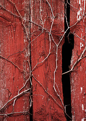 Poster featuring the photograph Red Barn Wood With Dried Vines by Rebecca Sherman