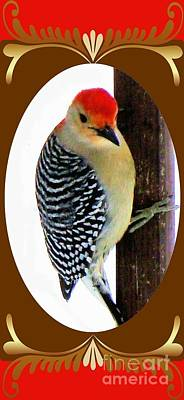 Poster featuring the photograph Red-bellied Woodpecker Framed by Janette Boyd