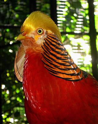 Red Bird Poster by Pamela Walton