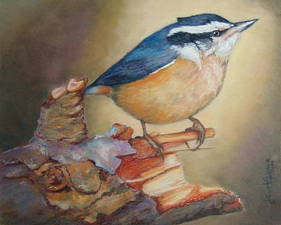 Red-breasted Nuthatch Bird Poster