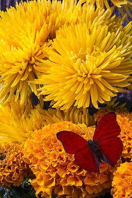 Red Butterfly On African Marigold Poster by Garry Gay