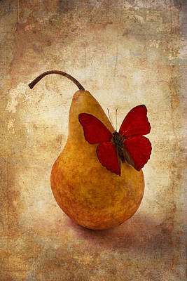 Red Butterfly On Pear Poster by Garry Gay