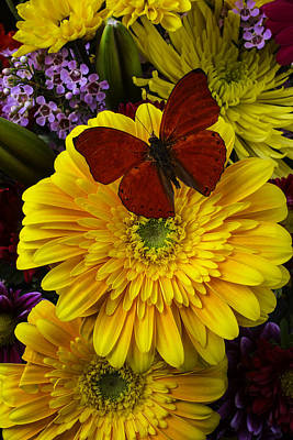 Red Butterfly On Yellow Daisy Poster
