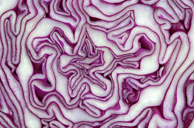 Red Cabbage Abstract Poster by Nigel Downer