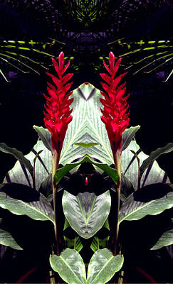 Red Canna Lilies Mirrored Symetry Poster