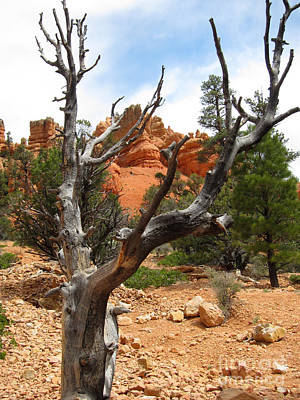 Red Canyon Tree And Rocks Poster