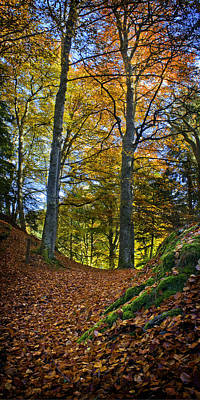 Red Carpet In Reelig Glen During Autumn Poster