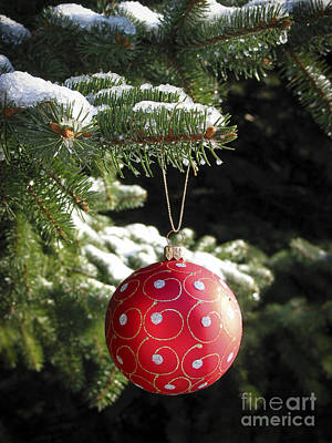 Red Christmas Ball On Fir Tree Poster