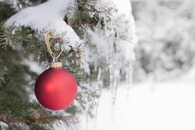 Red Christmas Ornament On Icy Tree Poster by Elena Elisseeva